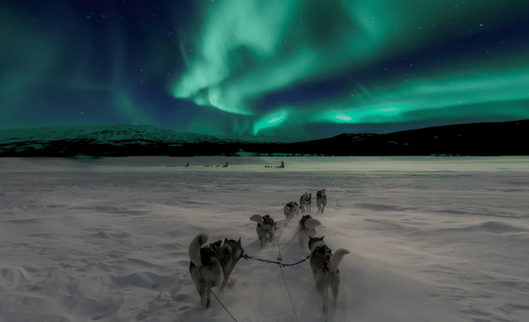 dog sledding in lapland under the northern lights